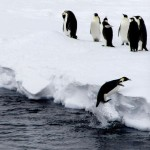 Jumping Penguins - Antarctica - Argentina