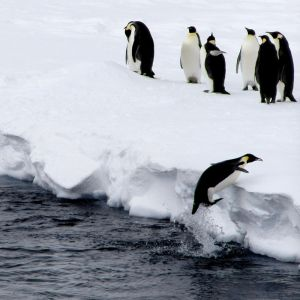 Jumping Penguins - Antarctica - Argentina - Last chance to travel to Antarctica